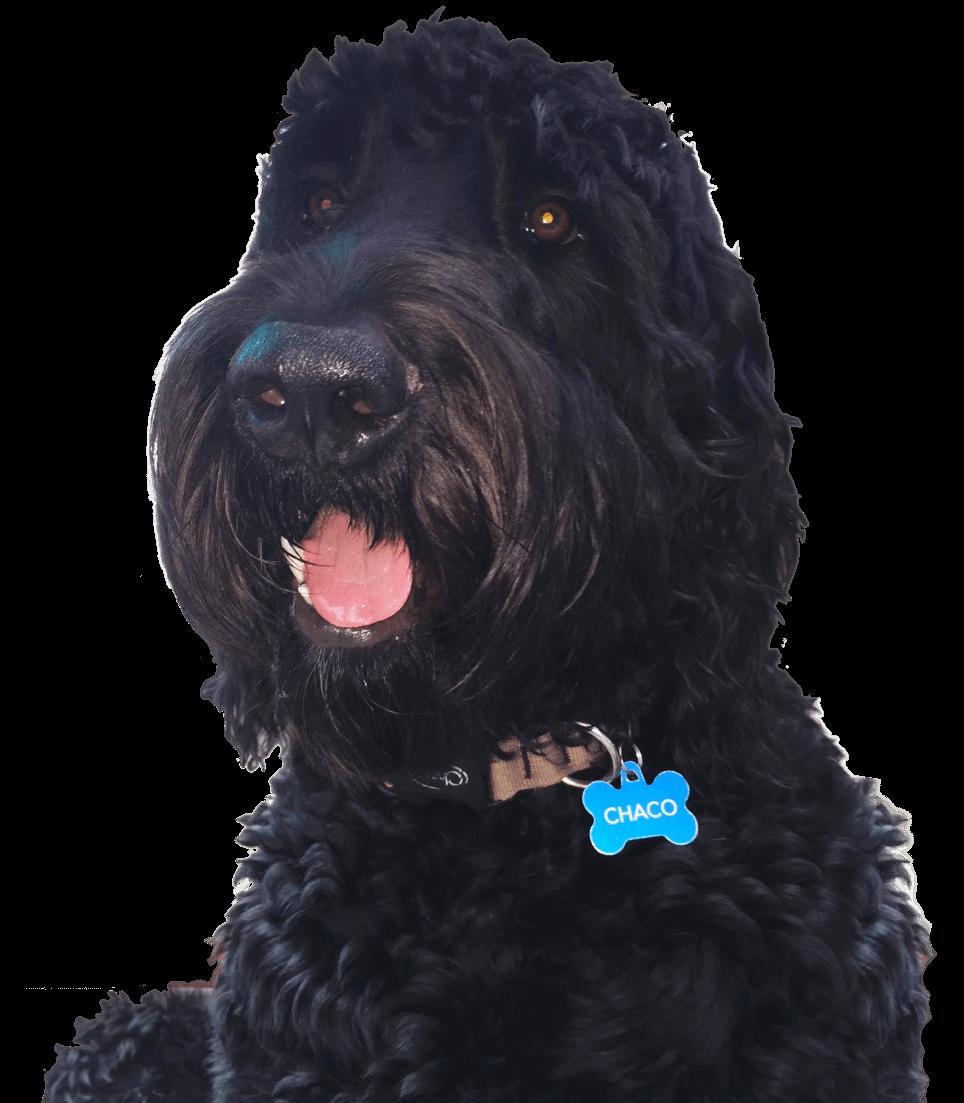 Chaco Dog