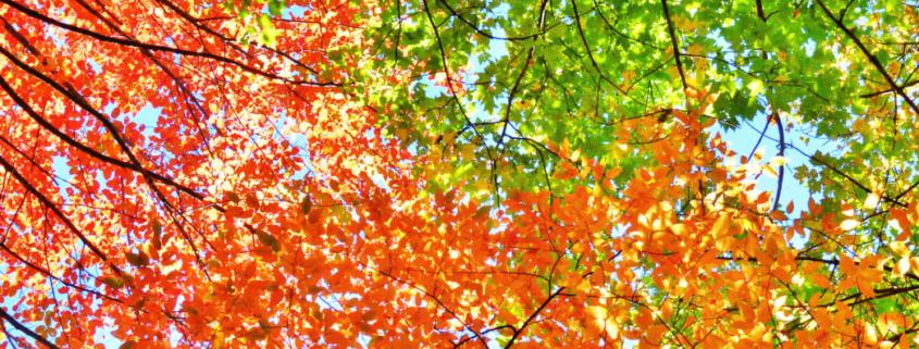 00-20161004 North Carolina Autumn Leaves